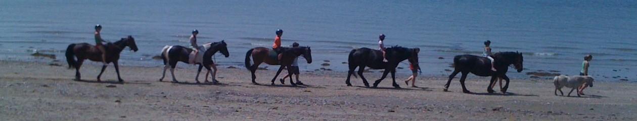 Horse Island Camp & Trail Rides